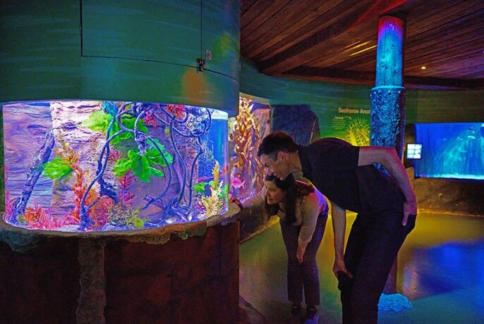 People looking at a colourful aquarium display.